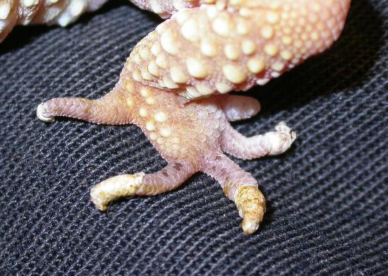 Ritenzione della pelle sulla punta della dita