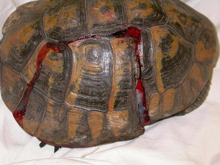 Tartarughe 10 miti da sfatare aae onlus for Vasche da giardino per tartarughe