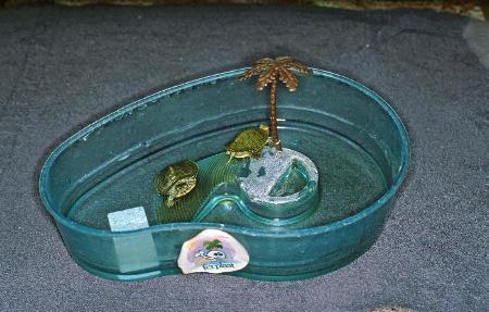 Questa sistemazione è totalmente inadeguata per allevare le tartarughine acquatiche