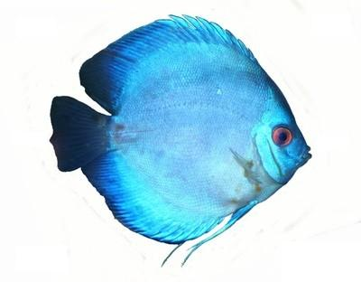 acquario6