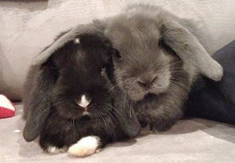 Non riprodurre i conigli