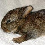 bunny_min