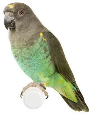 Gestire i pappagalli in cattività - AAE ONLUS