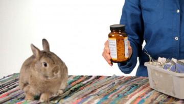 dare una medicina al coniglio