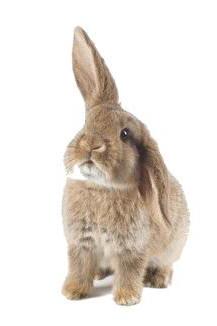 I giochi per conigli aae onlus - Casetta per conigli ...