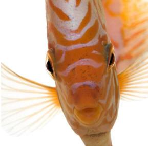 pesce_occhi