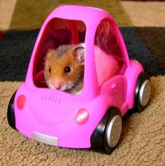 pet transport 2