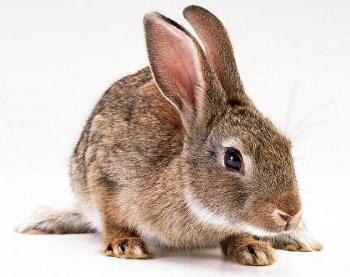 primo coniglio 2