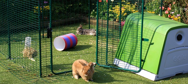 recinto coniglio