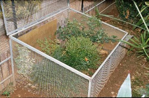 La protezione da possibili predatori e la prevenzione della fuga è particolarmente importante per le tartarughe neonate. Un vivario all'aperto di questo tipo garantisce la massima sicurezza.